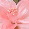 Dalie di Stoffa rosa