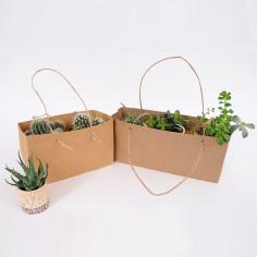 Borse per piante avana insieme