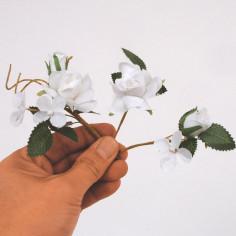 Pick rosellina bianca