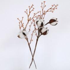 Fiore del Cotone