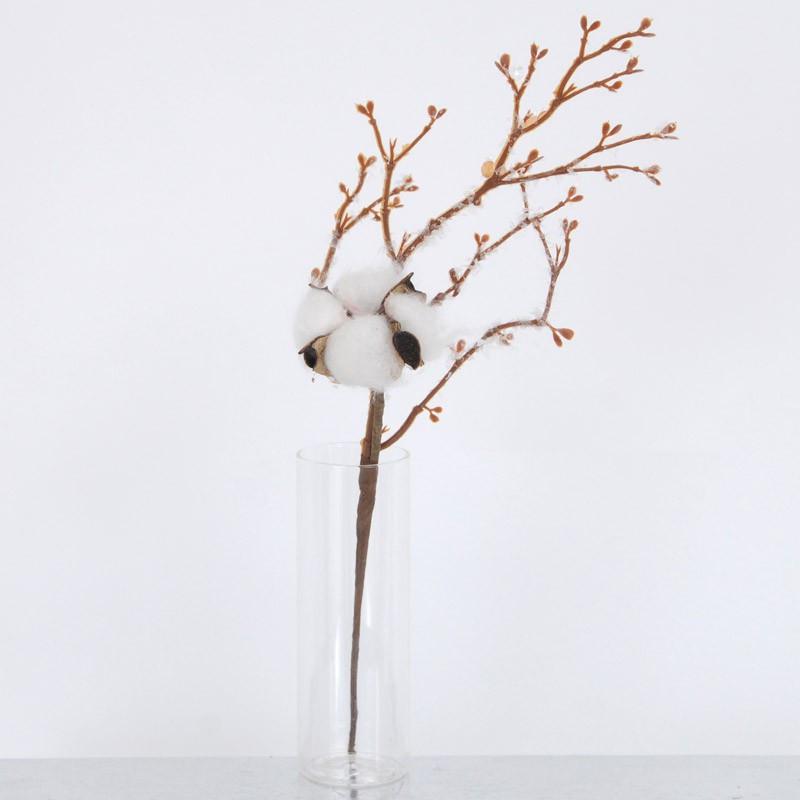 Fiore del Cotone da uno