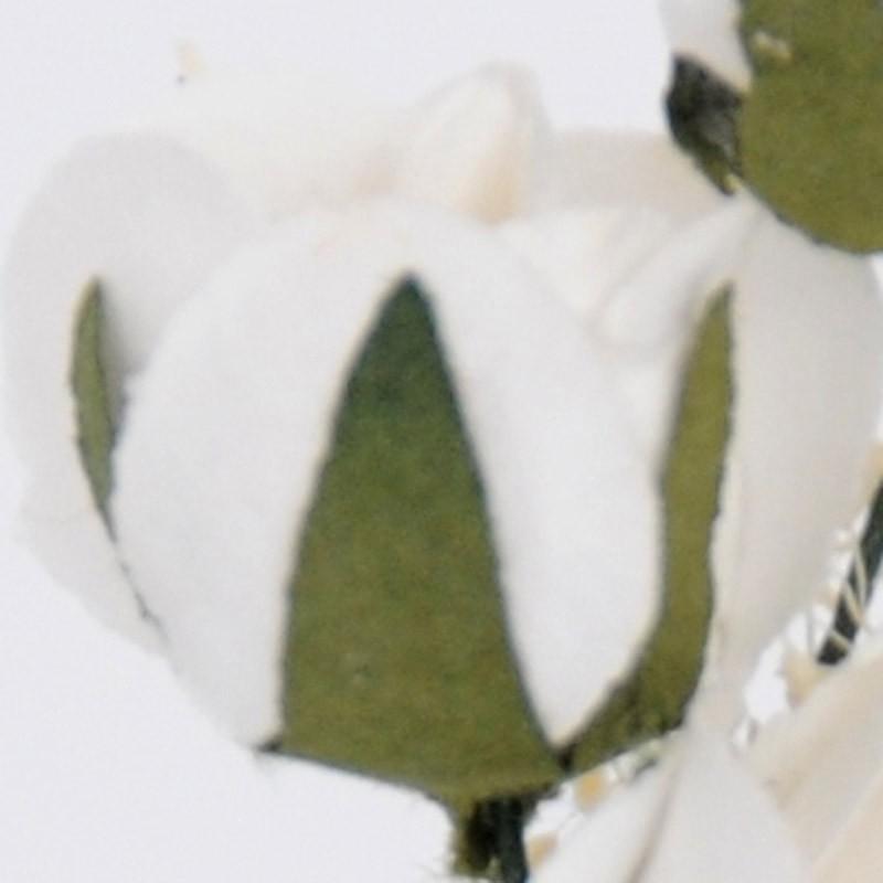 gipsy bianco