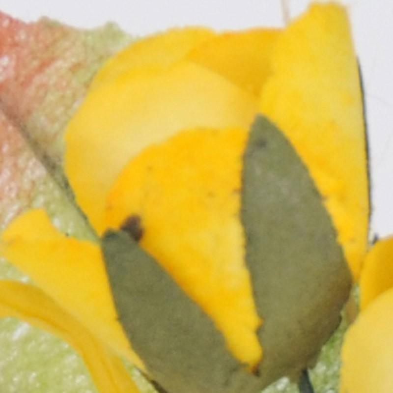 gipsy giallo